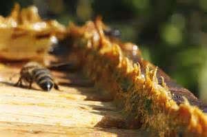 Insecticidas y fungicidas ecológicos en el cultivo de cannabis