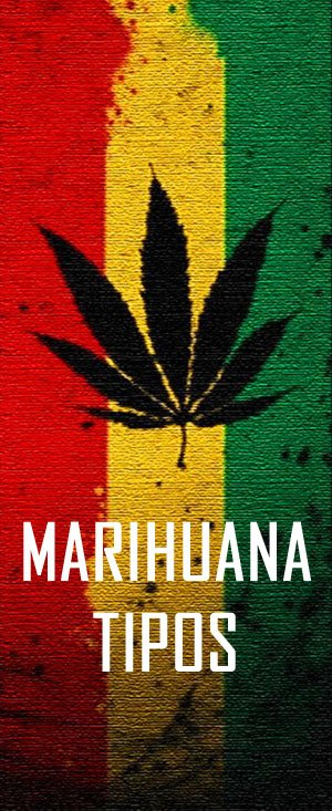 todo sobre cannabis