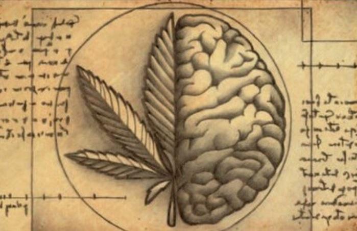 cannabis y cerebro