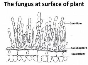 Lucha biologica contra los hongos