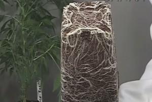 El cultivo en coco