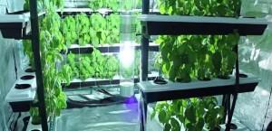 Aprovecha el espacio con el cultivo vertical